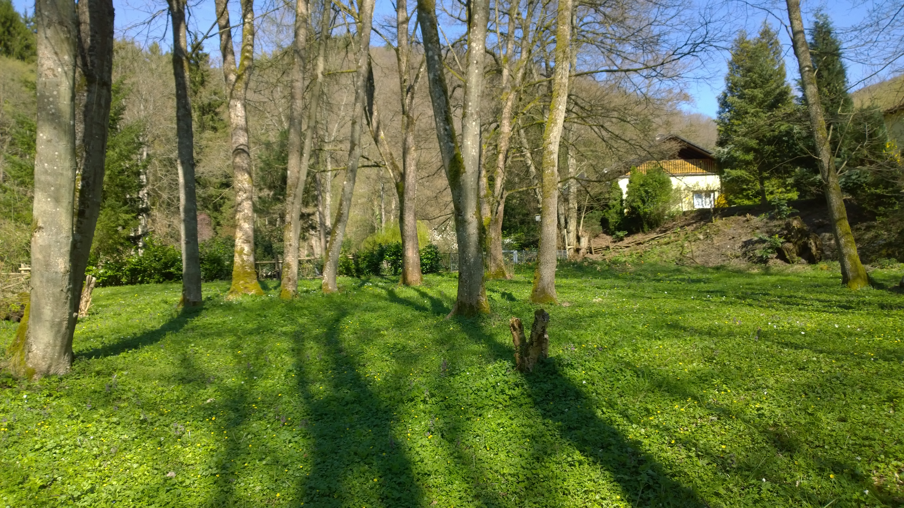 Blick von Teichwiese auf Haus.jpg